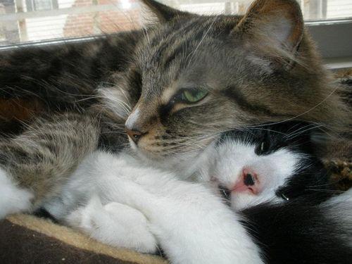 Mitzi and Baily