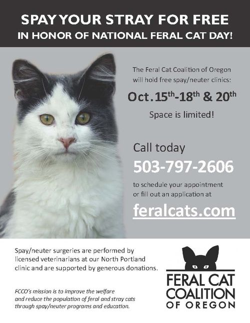 Feralcatday2013