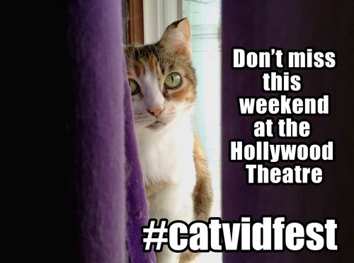 HoD-FB-Hollywood-Theatre-Cat-Video-Fest
