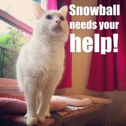 Snowball needs your help