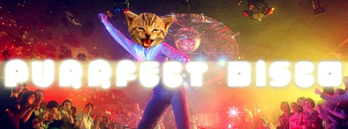 Purrfect disco